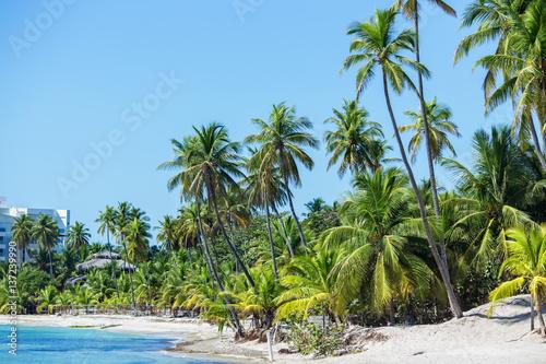 Foto op Plexiglas Caraïben the most beautiful tropical beach. Clear water, blue sky, greem palm trees, white sand.