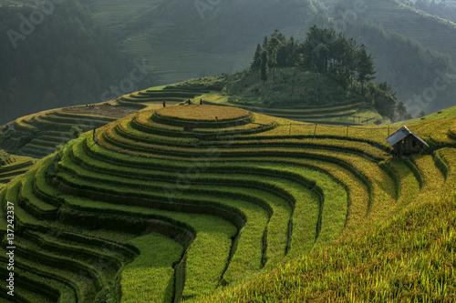 Garden Poster Rice fields Beautiful rice terraces Vietnam