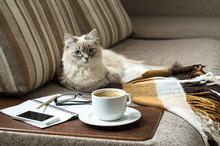 Cup Of Hot Coffee With Marmalade Book Points The Blanket On The Couch And Cat The Window