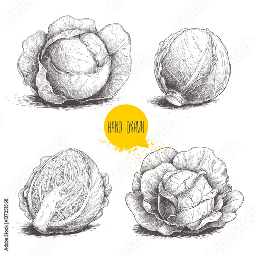 Valokuva Hand drawn sketch style set of cabbages