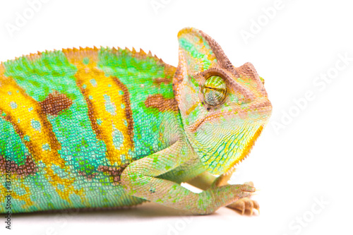 Staande foto Kameleon Yemen chameleon muzzle isolated on white background