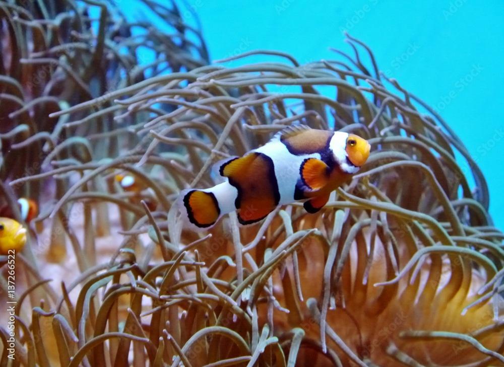unterwasserpflanzen zum ausmalen  ausmalbilder