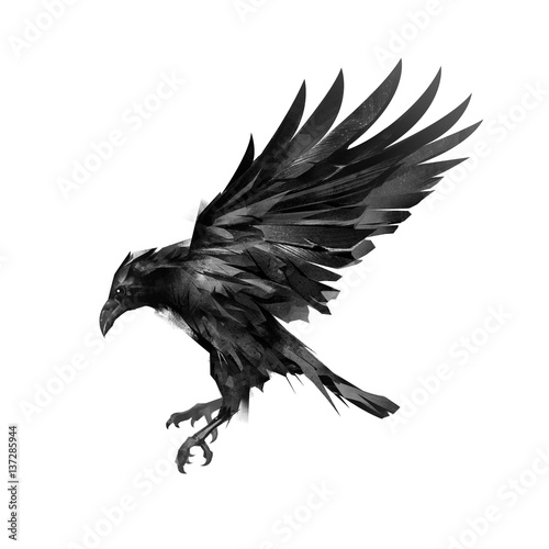 Canvas Print drawing a sketch of a flying black crow on a white background