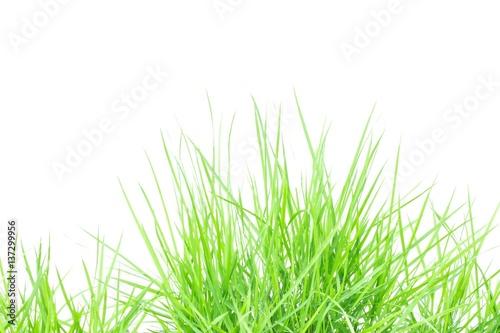 Deurstickers Gras Green grass on white background