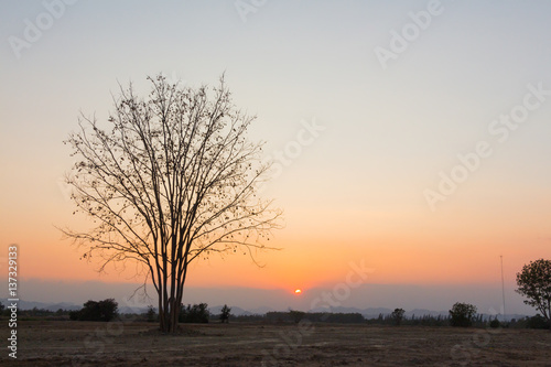 Papiers peints Corail Sunset on silhouette of dried tree in countryside