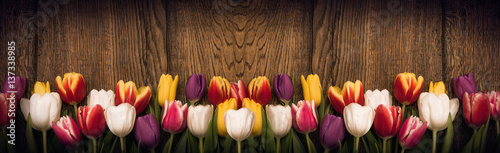 Fototapeta  Spring tulips on wooden background