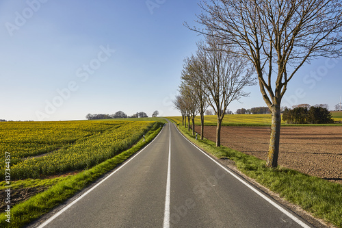Fotografering  Weite Straße zwischen Feldern