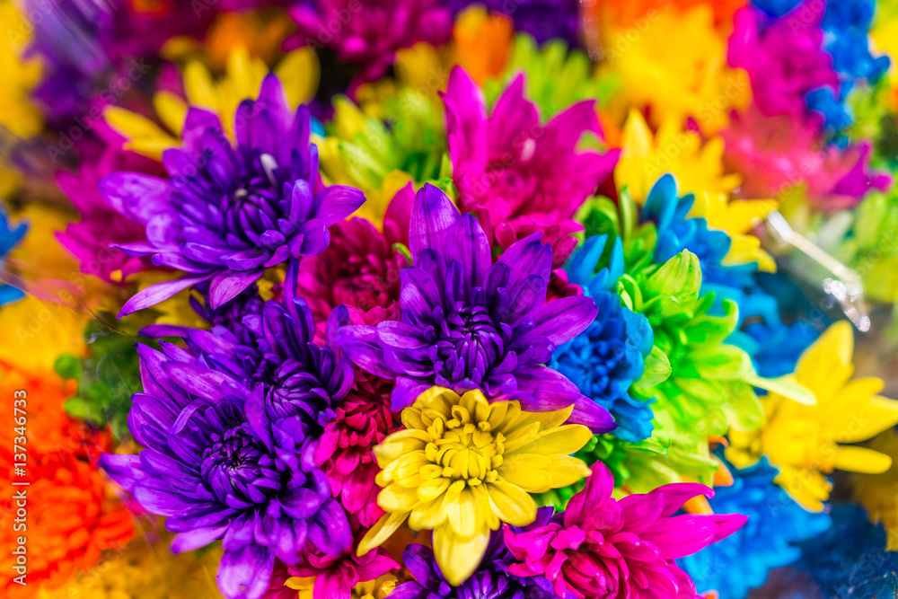 Fototapety, obrazy: Multi colored dyed daisies in bouquets