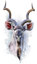 Kudu Watercolor Painting