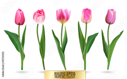 Foto op Plexiglas Tulp Realistic vector tulips set. Not trace. The blank for your design. Pink tulips flowers on white background.