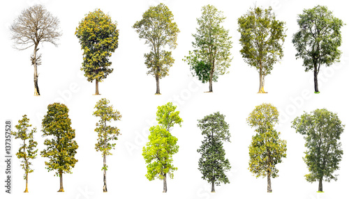 Photo  Collection of trees isolated on white background.