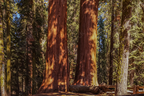 Photo sur Aluminium Parc Naturel In The Kings canyon and Sequoia national Park