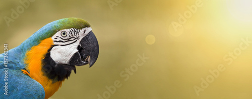 Foto op Aluminium Papegaai Website banner of a colorful funny parrot