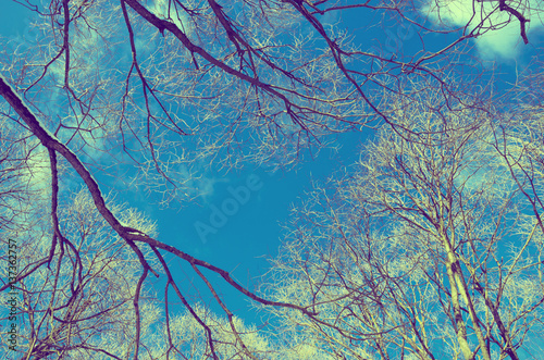 Fotografie, Obraz  Branches on a background of blue sky.Retro color style