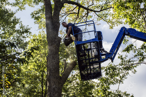 Fotografie, Obraz  man on aerial lift cutting tree