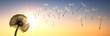 canvas print picture - Pusteblume im Sonnenuntergang 1