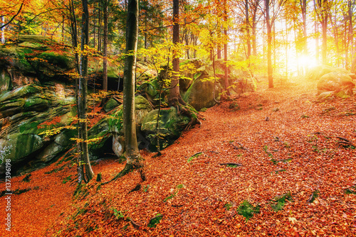Fotobehang Baksteen Forest in sunny afternoon while season. Autumn Landscape. Ukrain