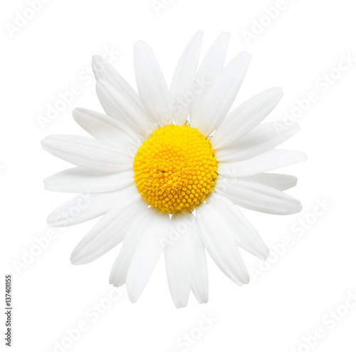 In de dag Madeliefjes One white daisy flower isolated on white background