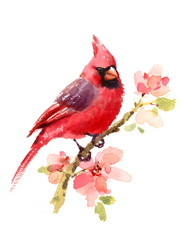 Fototapeta Romantyczny Cardinal Red Bird On a Branch with Flowers Watercolor Hand Drawn Summer Illustration isolated on white background