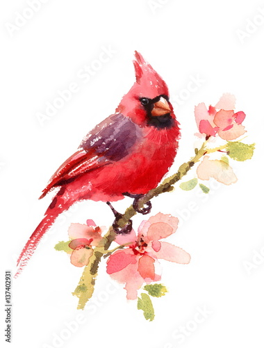 Tablou Canvas Cardinal Red Bird On a Branch with Flowers Watercolor Hand Drawn Summer Illustra