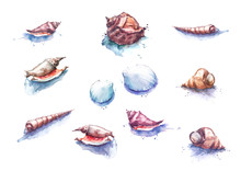 Watercolor Illustration Of A Set With A Picture Of Different Variations Of Seashells, Snails. Isolated On White Background.