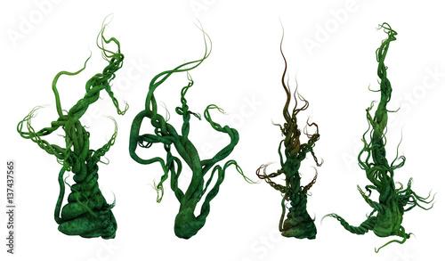 Fotografie, Obraz  3D Growing Plant Vines