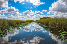 Florida Everglades View Panora...