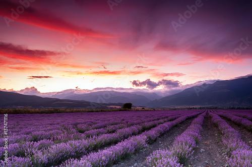 Printed kitchen splashbacks Eggplant Lavender