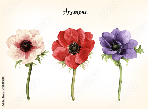 Photo  Anemone, watercolor, can be used as greeting card, invitation card for wedding, birthday and other holiday and  summer background
