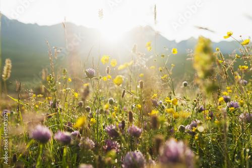 Blooming meadow near Black Cuillin, Scotland - 137473527