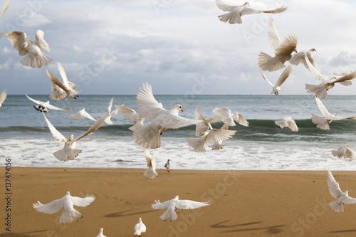 Flock of white birds flying over beach, Benidorm, Spain