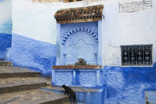 Black Cat Walking Up Stairs Past Water Fountain; Chefchaouen, Morocco