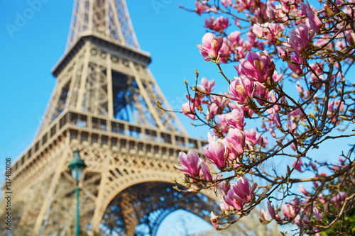 Poster Tour Eiffel Pink magnolia in full bloom and Eiffel tower over the blue sky