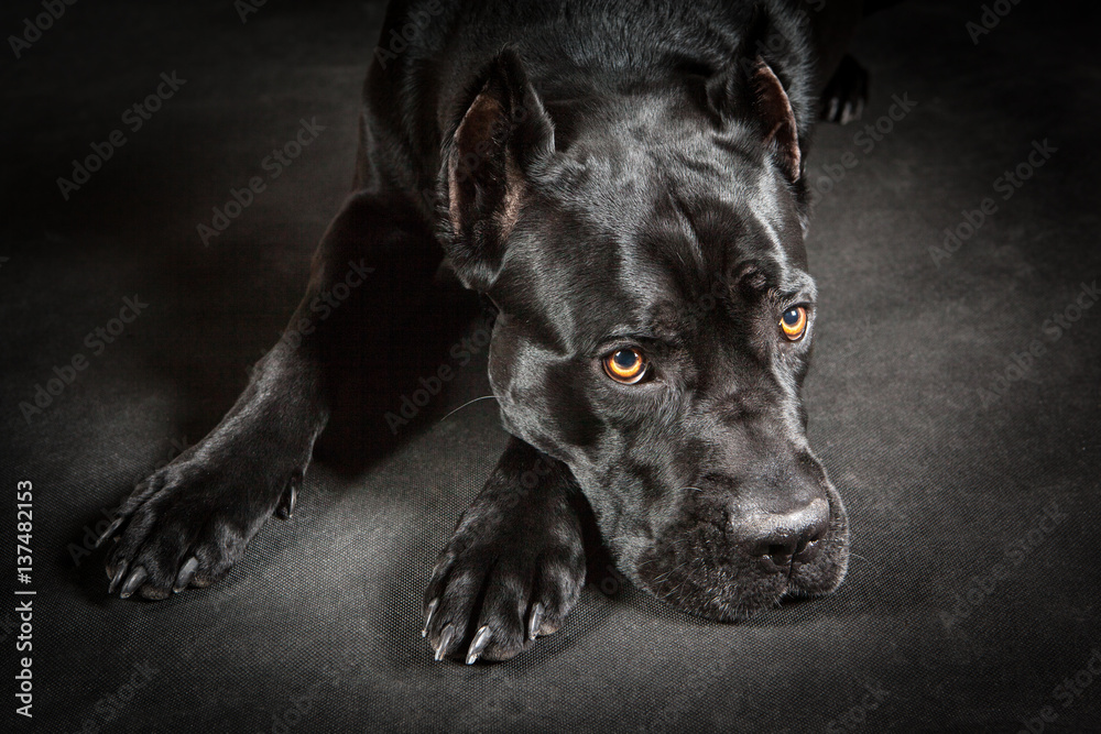 bilder schwarzer hund auf schwarzem grund - kostenlos zum