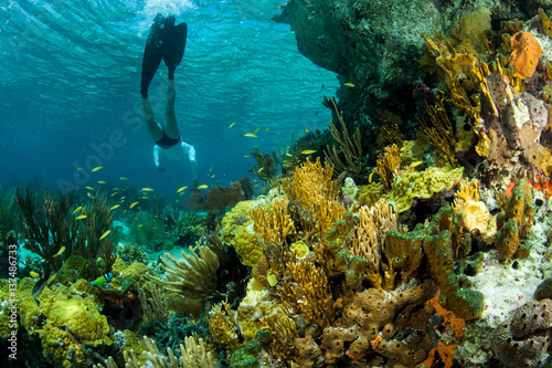 Fotobehang Koraalriffen Woman snorkeling by fish and sea bed, Staniel Cay, Bahamas, Caribbean