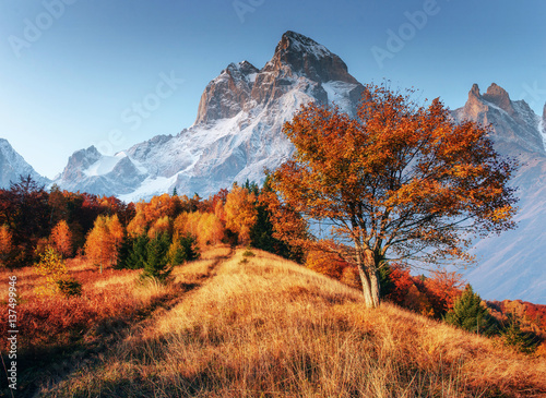 Aluminium Prints Autumn Fantastic collage of snowy peaks in the morning sunlight. Autumn