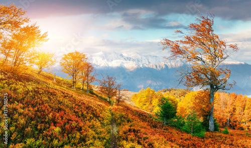 Foto op Canvas Herfst mountain range in the Carpathian Mountains in the autumn season.