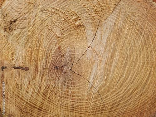 stos-drzewa-posiekane-pnie-drewno-opa