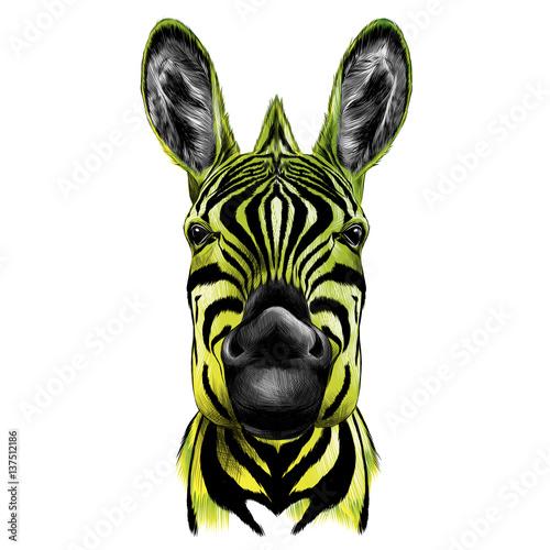 glowa-zebry-portret-rysunek-kolorowy-wektorowy-zolto-czarny