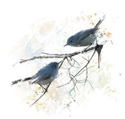 Fototapeta Ptaki Blue-gray Gnatcatchers watercolor