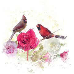 Fototapeta Romantyczny Male and Female Northern Cardinals watercolor