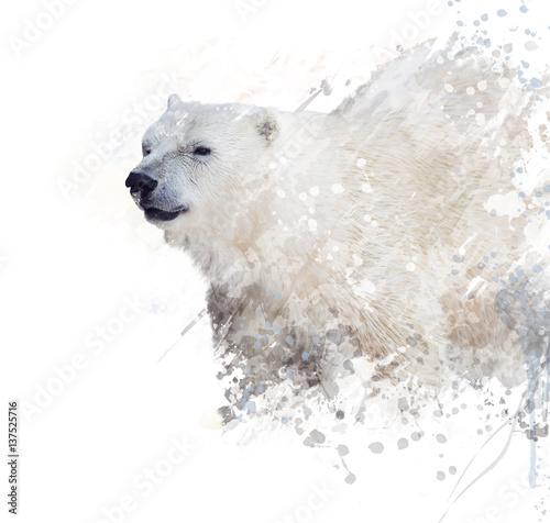niedzwiedz-polarny-akwarela