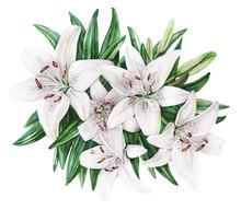 Lilies Bouquet Flower Botanical Watercolor Illustration