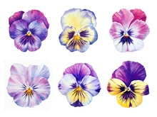 Set Of Six Botanical Watercolo...