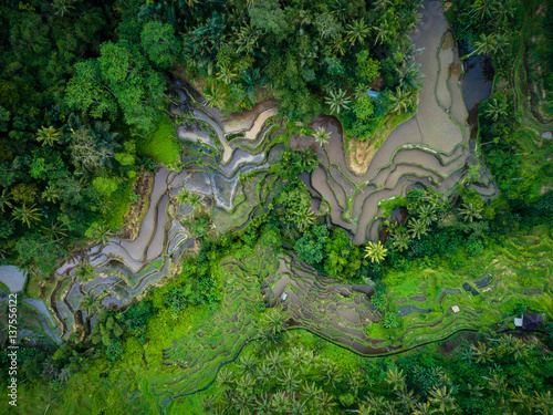 Foto op Canvas Asia land View over the rice terraces of Tegalalang