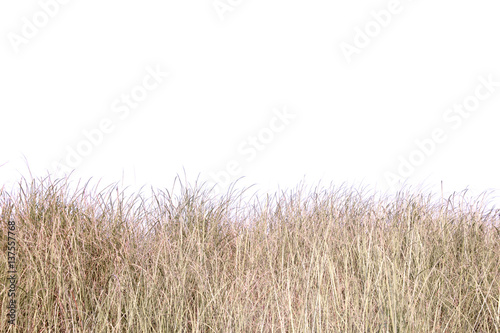 Photo sur Toile Herbe dry grass field.