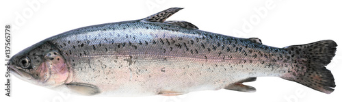Fresh trout Canvas-taulu