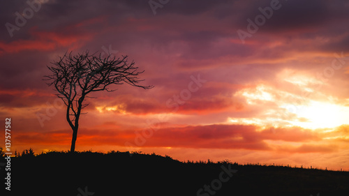 Fototapety, obrazy: Tree with sunset