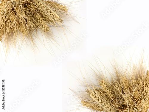 Fototapeta zboża, kłosy, wieś, pszenica obraz