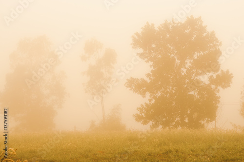 Papiers peints Foret brouillard Silhouette forest with fog and sunset.